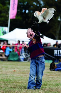 Falconry Fun